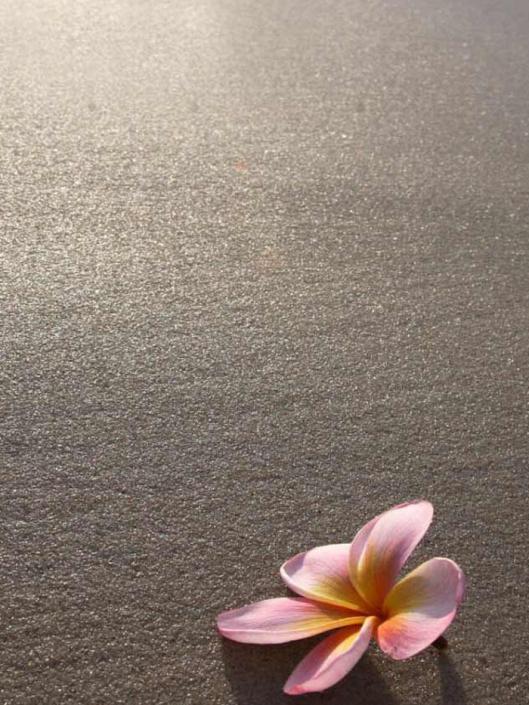 Frangapani on the beach by Raglan Massage